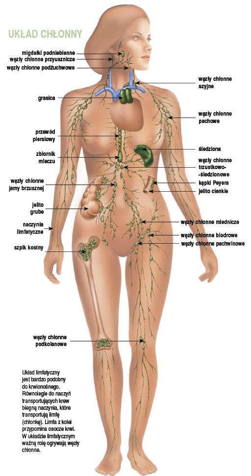 obrzęk limfatyczny - układ limfatyczny